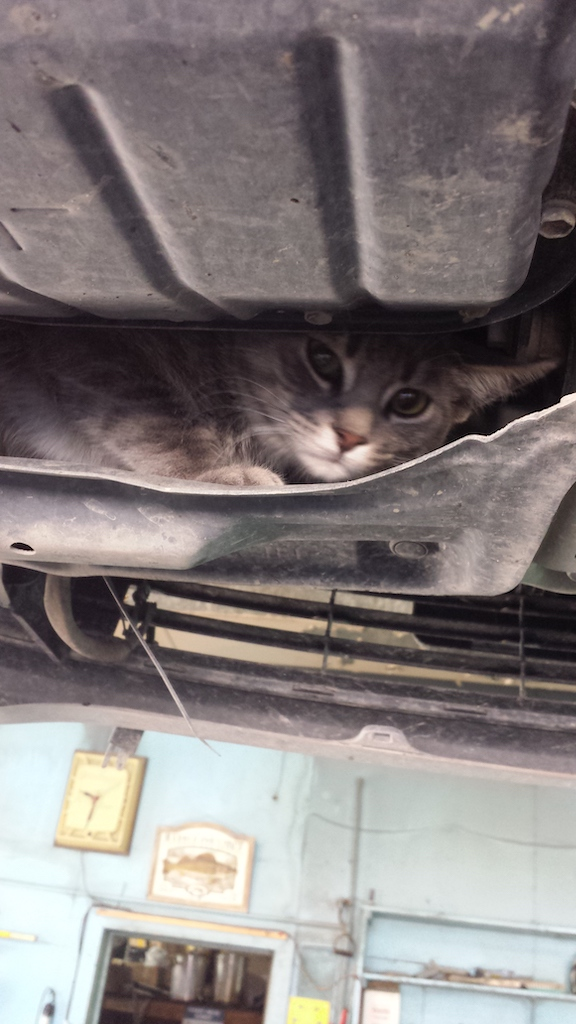 Eye Spy More Adventures With Animals Auto Service World