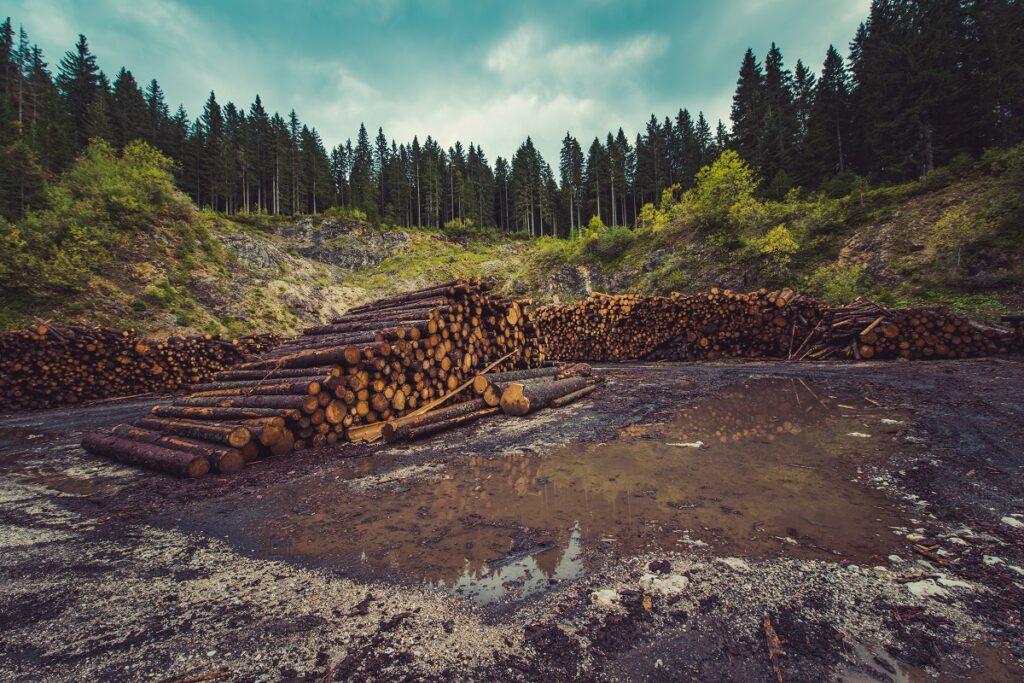 several logs stacked after logging.